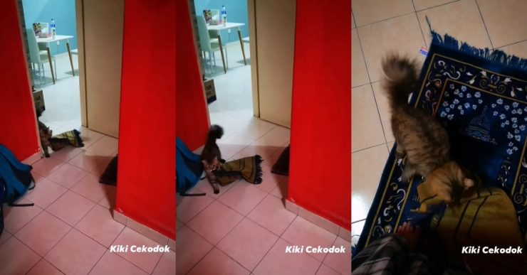 kucing solat